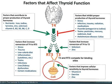 can probiotics help with low thyroid picture 6