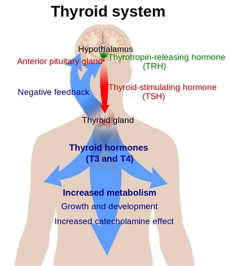 causes for low thyroid picture 5
