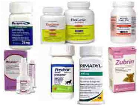 canine pain relief treatments picture 1