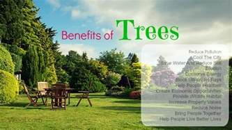 health benefits of sibucao tree picture 3
