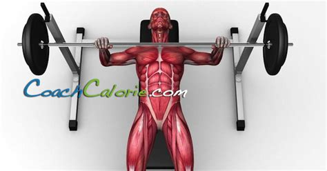 excercises to build muscle picture 7