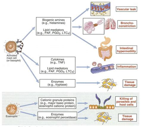 foods that increase blood flow picture 13