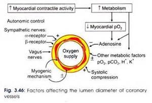 sympathetic blood flow picture 10