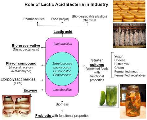 lactic acid yeast benefits picture 15
