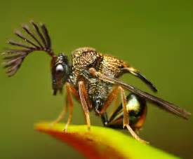 insect picture 11