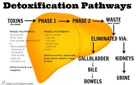 detoxification of the liver picture 3