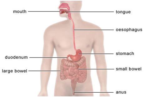 nexium and intestinal bacteria picture 5