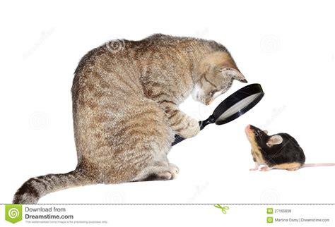 feline picture 10