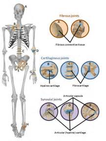 types of joints picture 7