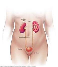gall bladder and blood in urine picture 2