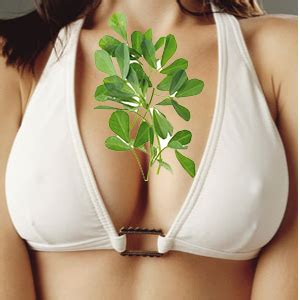 fenugreek breast picture 3
