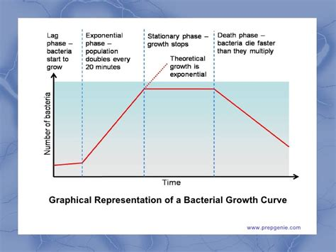 Phases for bacterial growth picture 3