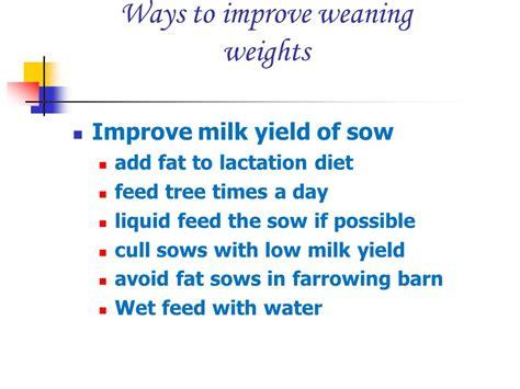 adding liquid fat to show pig diet picture 2