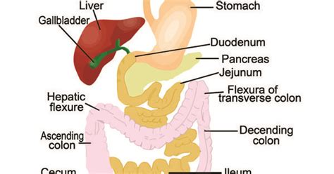 colon cleansing in pictures picture 6