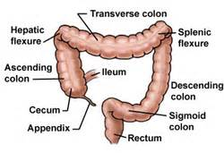 anatomy colon picture 10