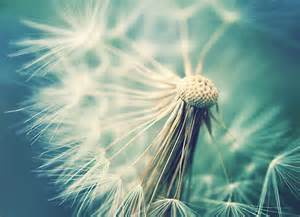 women's with dandelions picture 6