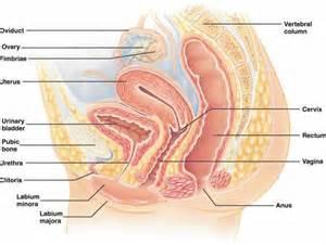 diagram of large penis inside woman's vigina picture 2