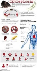 what is le cerbvas disease picture 5