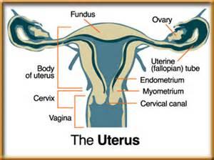 bladder wall thickening women picture 5