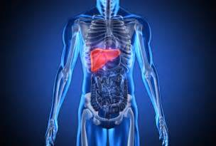 where is the liver in the body picture 10