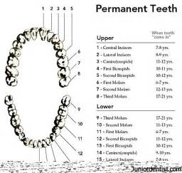 false teeth permenant picture 6