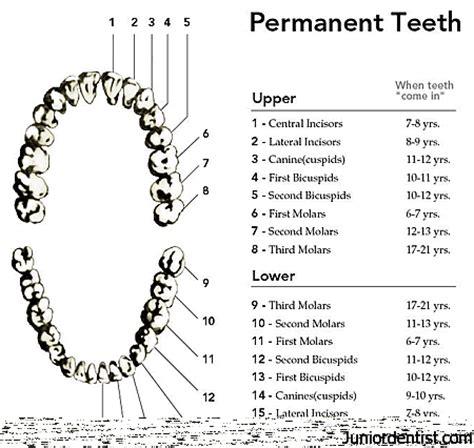 false teeth permenant picture 13