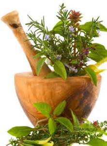list of herbal medicinal plants picture 2