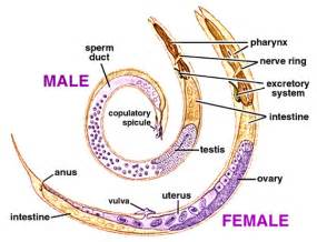 digestion system of hagfish picture 3