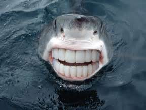 shark teeth picture 13