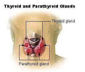 armour thyroid doctor picture 11