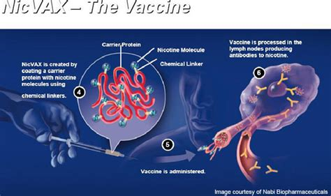 stop smoking vaccine picture 3