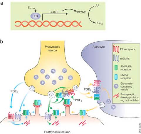 testosterone cypionate mechanism of action picture 9