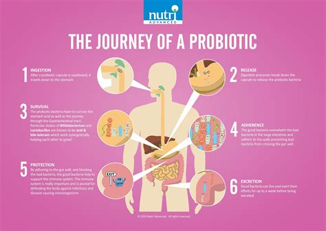 what is a probiotic picture 1