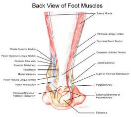 back muscle and tendon pain picture 1