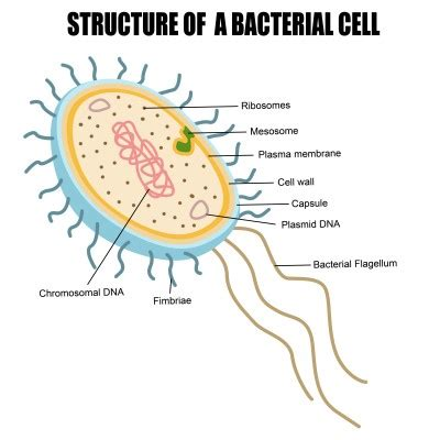 what is it when you have ongoing bacterial picture 1