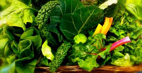 is green leafy lettuce good for people with picture 4