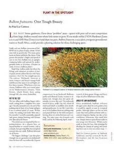 bulbine natalensis side effects picture 15