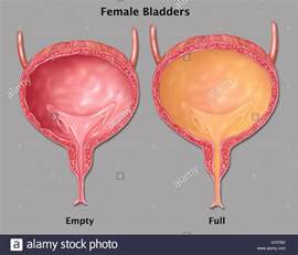 bladder play filling picture 1