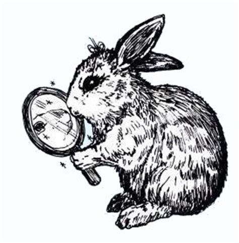 domestc rabbit skin diseases picture 18