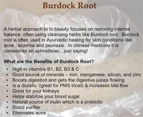 health benefits of burdock root tea picture 1