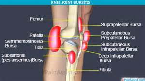 plica knee joint picture 7