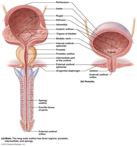 female bladder torture picture 6