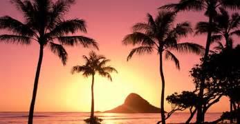 +hawaiin silky herbal picture 11