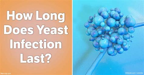 fat bomb yeast picture 9