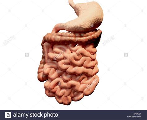 duodenum stomach colon picture 9