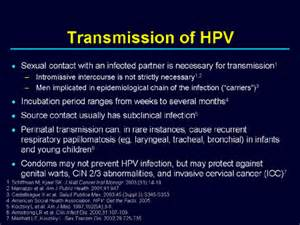 herpes virus info picture 2