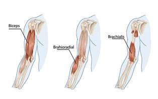 bicep muscle pain picture 11