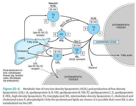 What is vldl cholesterol picture 13