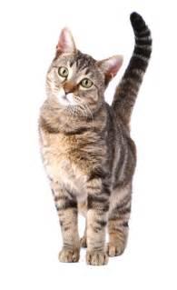 feline h picture 1