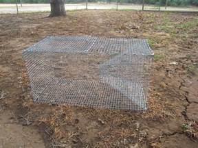 snaketrap picture 9